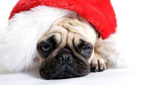 unhappy puppy in Christmas Hat