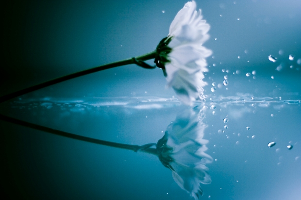 teardrops-flower